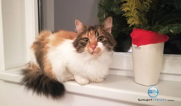 Katze Kitty - Huawei Mate 9 - SmartTechNews