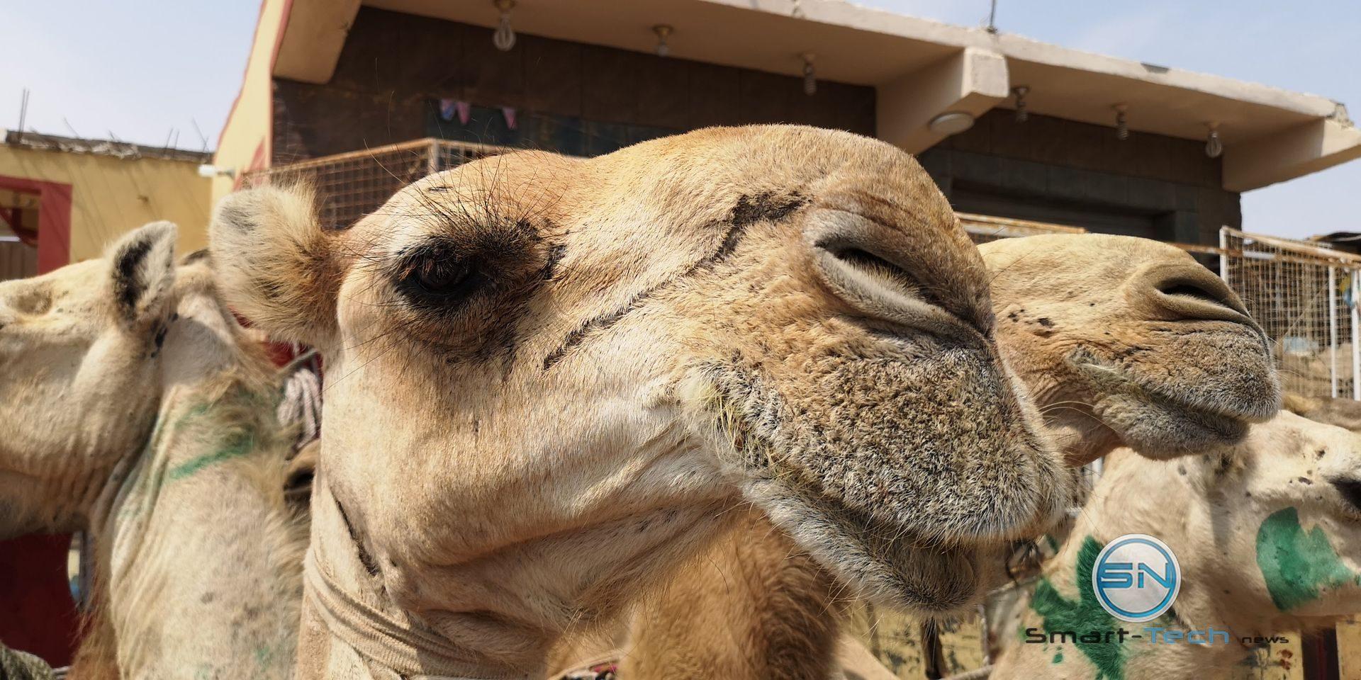 Kamel Selfie El Shalateen Huawei P20pro
