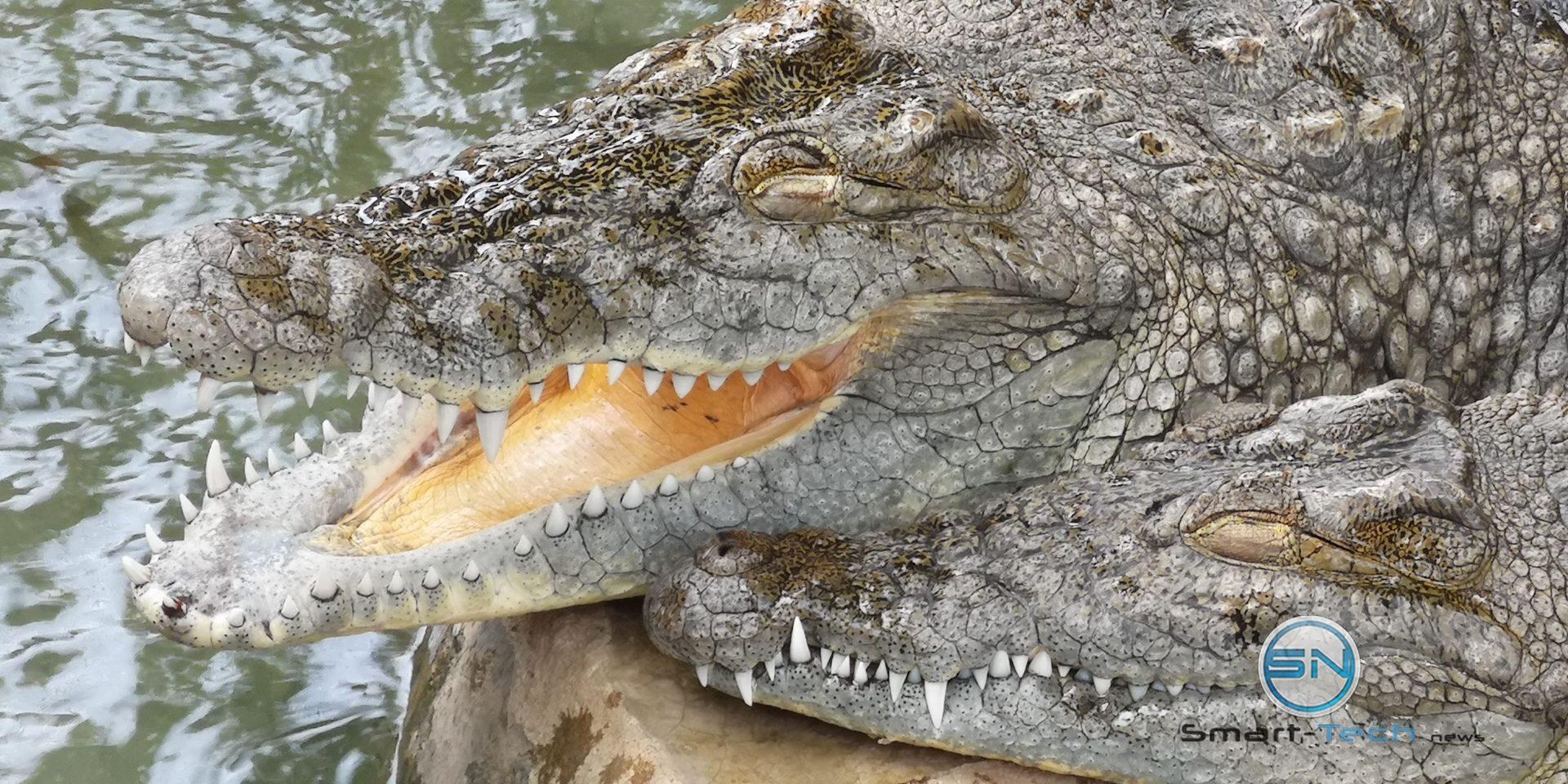 Krokodil 5fach Zoom Luxor Huawei P20pro